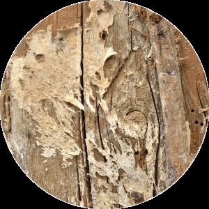 Göhlich_Umwelthygiene_Dienstleistungen_Holz-_und_Bautenschutz
